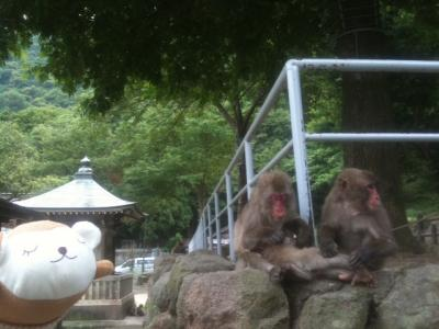 高崎山自然動物園4