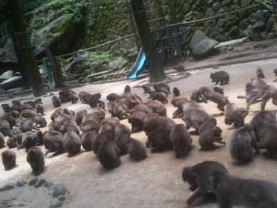 高崎山自然動物園5