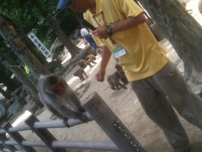 高崎山自然動物園6