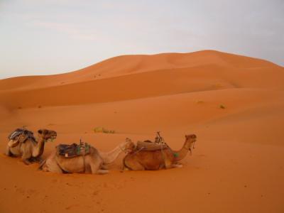砂漠ツアー6