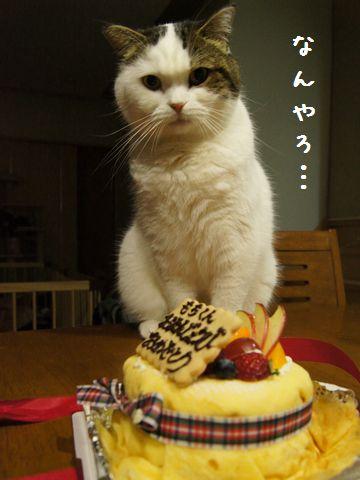 ケーキ気になる