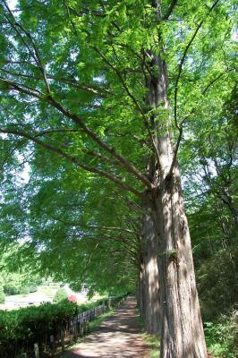 木立の道2