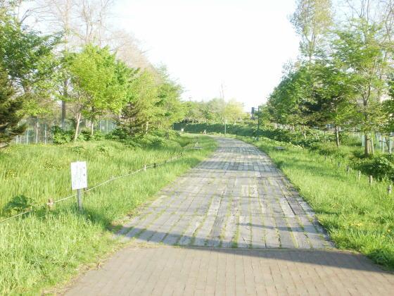 公園の木道