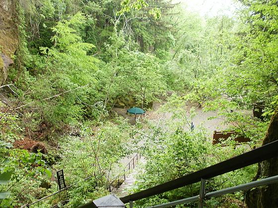最上部から、苔の洞門へと続く道を見下ろしたところです。