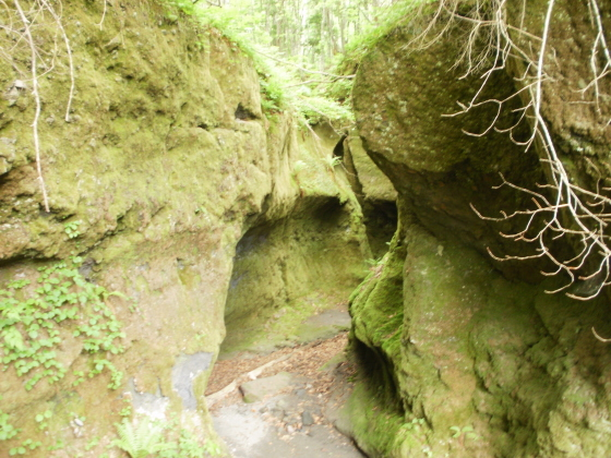 苔の洞門です。