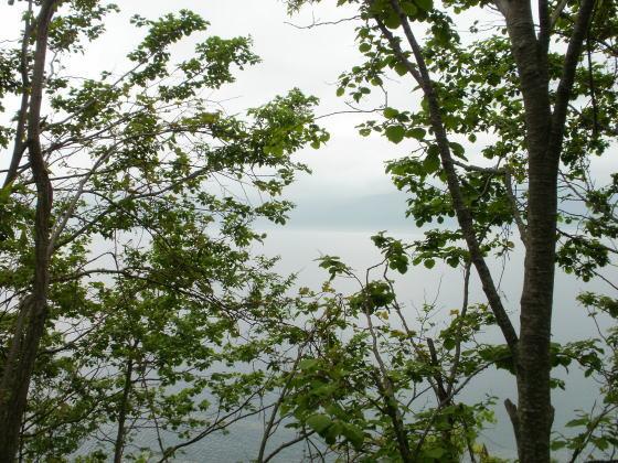 霧の支笏湖です。