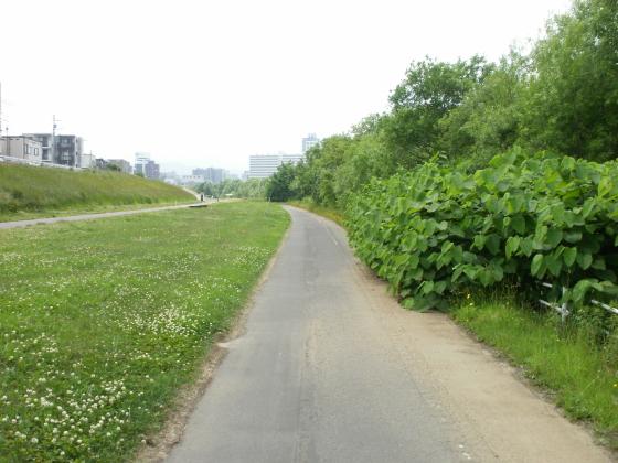豊平川沿いの遊歩道です。