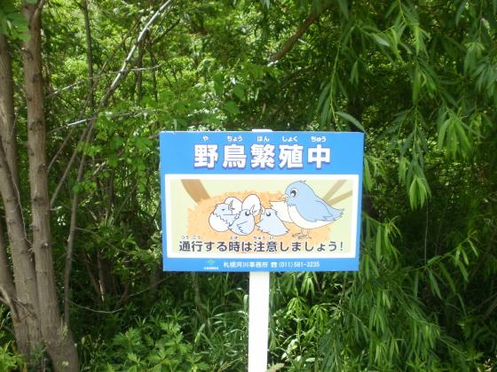 野鳥保護の看板がありました。