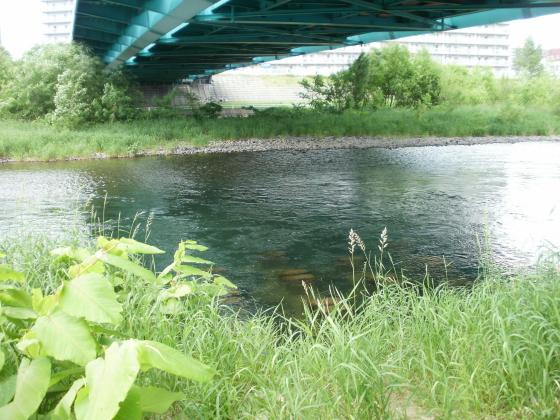 一条大橋の下の流れは結構深そうです。