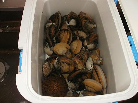 大量のホッキ貝をゲットしました。