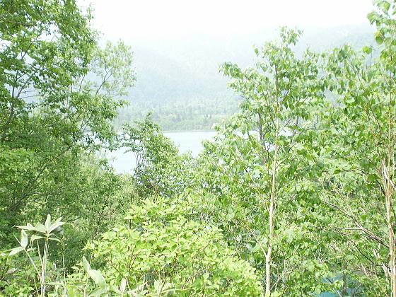 オコタンペ湖が木々の合間から見えます。
