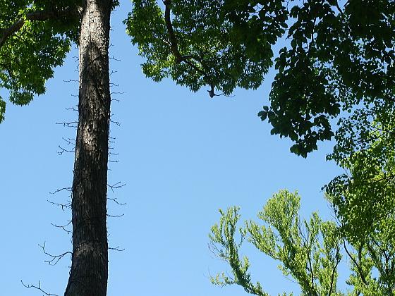 支笏湖温泉に着きました。木々の合間から見える澄み渡った青空が美しい青空