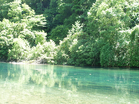 エメラルドグリーンの千歳川と深い森のコントラストが素晴らしいです。