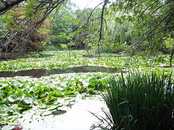 池の周囲は緑に溢れ、和みます。