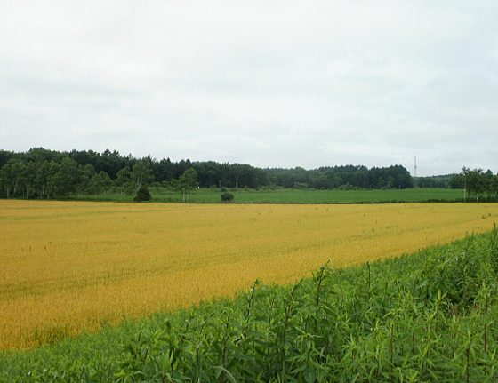 かなり広い畑が見えます。