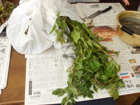 これから山菜の後処理です。ウドの大半は近所にお裾分けです