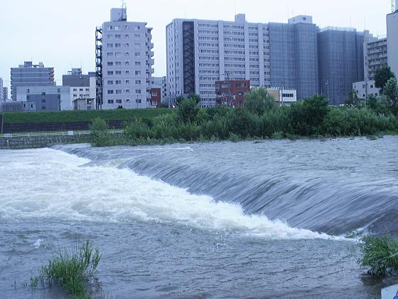 雨の所為で増水した豊平川です。