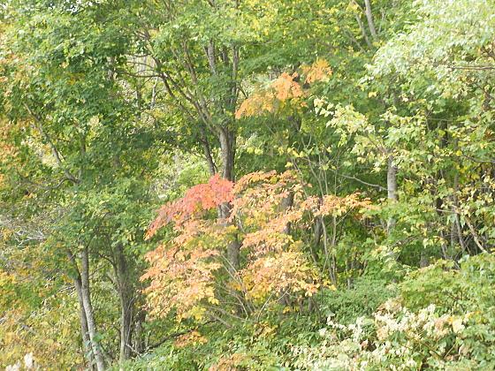 厚田方面の山は紅葉が始まっています