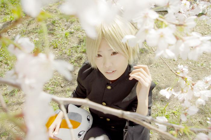 sakuranatume5
