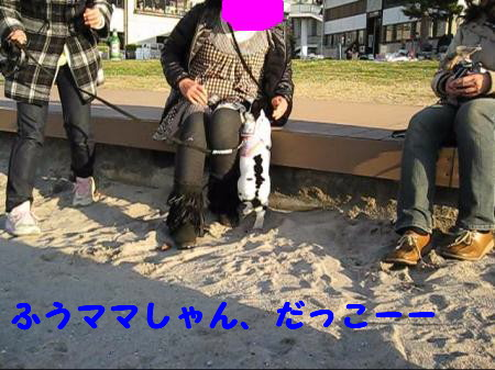 MVI_4545+002_00012_convert_2010121517045711.jpg