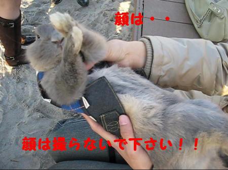 MVI_4559_0001_convert_201012151706491.jpg