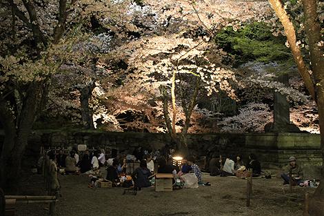 鶴ヶ城夜桜0428 002
