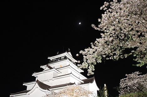 鶴ヶ城夜桜0428 001