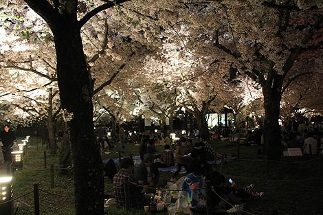 鶴ヶ城夜桜0428 012