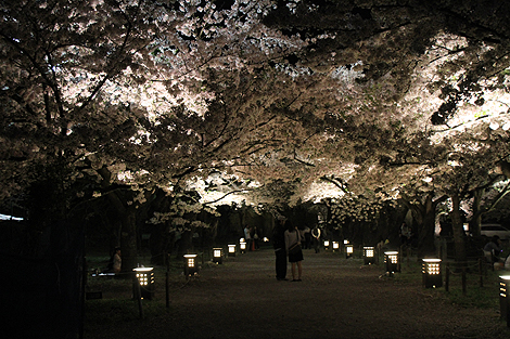 鶴ヶ城夜桜0428 011