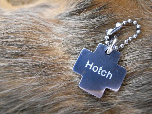 ノーフォークテリアのホッチ(ホッチと、ぼちぼち)