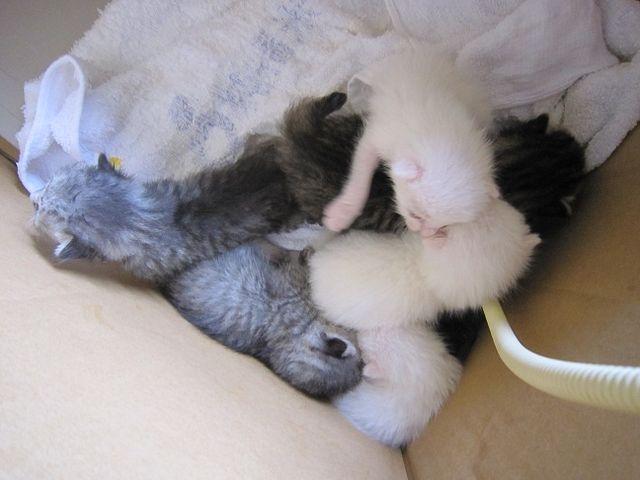 1007 花巻11匹子猫