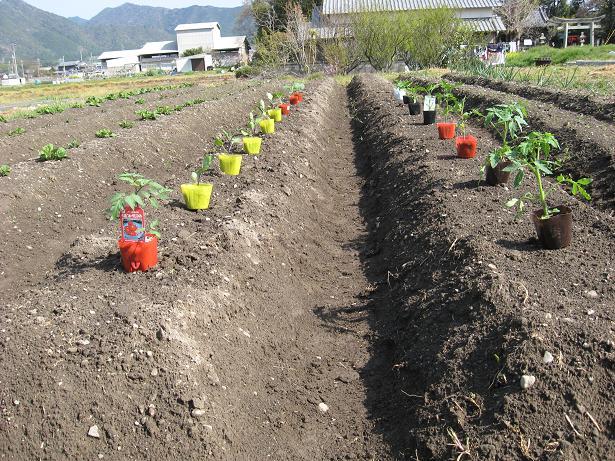 夏野菜の植付け 002