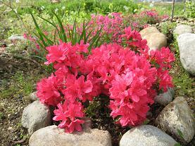 春の花第二弾 004