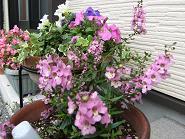 今日の花 017