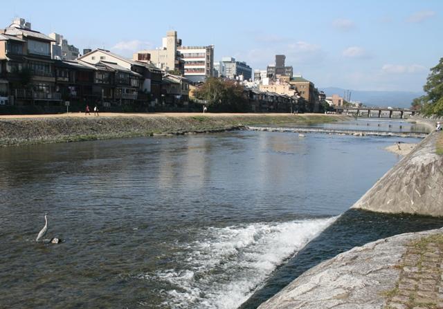 IMG_7584 加茂川のサギ W