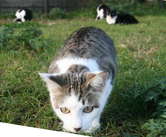 IMG_8078 広大跡地の野良猫 W