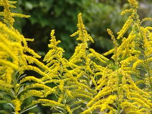 【味覚・運動・読書の秋】ムズムズしてない?秋の花粉症は風邪と間違えやすいやすい