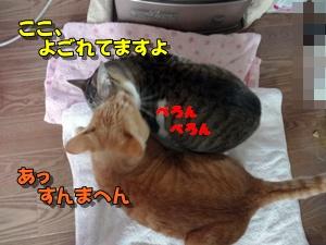 201112223.jpg