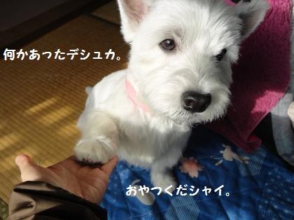 憑かれた犬