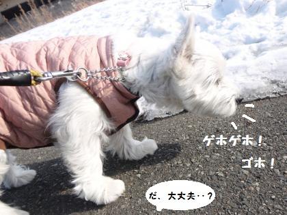 冬の散歩の大問題