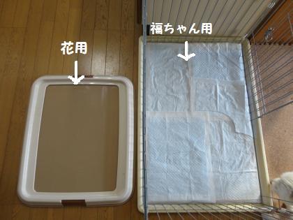 トイレの準備体操