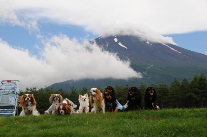 4288富士は雲の中。