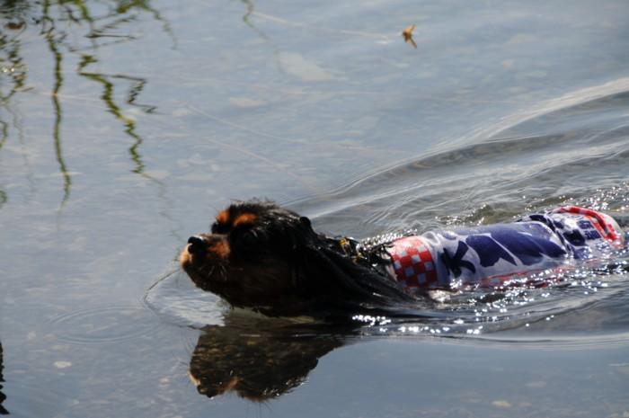 4314本栖湖初泳ぎ。。