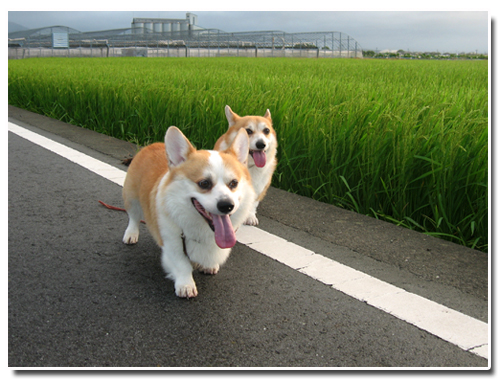 2011-0914お散歩