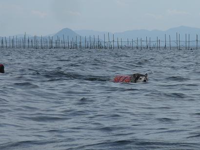 琵琶湖100912q