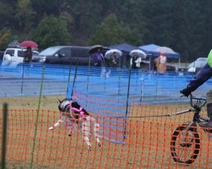 2014-11-09京都ギグレース (51)