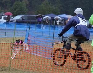 2014-11-09京都ギグレース (52)