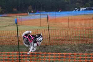 2014-11-09京都ギグレース (269)