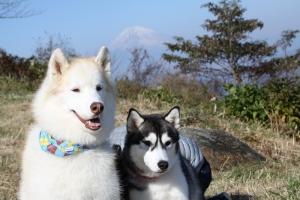 2014-11-22伊豆箱根2 053