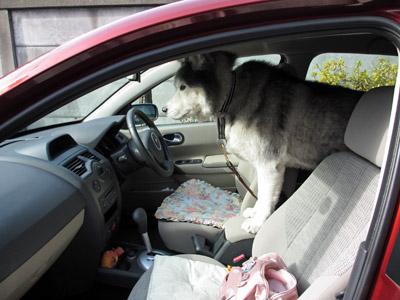 運転手とりゅふ